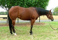 good example of undesirable conformation it s one of the best  all the pretty horses essay themes of all the pretty horses all the pretty horses