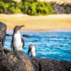'Galápagos Penguins', a zoomable photo tile mosaic at #TileArray ( #mosaic #mosaics #penguin #penguins #galapagos #galápagos )