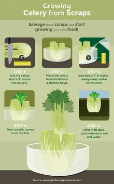 How To Regrow Your Veggies From Scraps  http://www.rodalesorganiclife.com/food/how-to-regrow-your-veggies-from-scraps?cid=soc_Rodale's%20Organic%20Life%20-%20Rodale's%20Organic%20Life%20-%20RodalesOrganicLife_FBPAGE_Rodale's%20Organic%20Life__