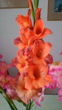 gladioly Gladiolus, Hollyhock, Plants, Jewelry, Flowers, Jewlery, Jewerly, Schmuck, Jewels
