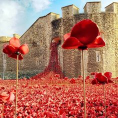 Blood Swept Lands And Seas Of Red, created to mark the centenary of the start of the Great War. It will eventually include ceramic poppies to represent all British or colonial military fatalities of the conflict. Ceramic Poppies, Remembrance Day Poppy, Armistice Day, England And Scotland, Tower Of London, World War One, Installation Art, London England, Beautiful Places