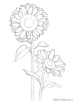 How to draw a sunflower step by step. Drawing tutorials for kids and beginners.