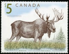 Canadian stamp with moose Postage Stamp Design, Postage Stamps, Wapiti, Canadian Memes, Popular Hobbies, Halftone Pattern, Stamp Printing, Illustrations, Fauna