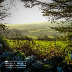 An early morning Irish mist gently caresses the luminescent meadows and rolling hills of Decomade and Lissycasey in County Clare, Ireland. Song Thrush, County Clare, Ireland Travel, Early Morning, Clare Ireland, Family Travel, Mists, Countryside, Irish