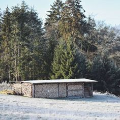 Dead wood . . #hike #winter #esthal #pfälzerwald #pfalz #winter #snow #ice #cold #faded #sunny #sun #outdoors #photography #photo #warm #green #trees #wood Green Trees, Winter Snow, Outdoor Furniture, Outdoor Decor, Hiking, Outdoors, Ice, Cold, Warm