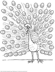 96 Best Coloring Pages/Line Drawings - Birds images ...