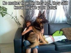 Only Dog Owners Would Understand These Funny Photos