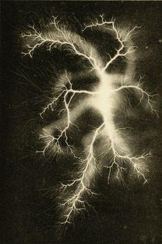 Lichtenberg figure from Über elektrische Entladungsfiguren auf photographischen Platten, by Anton Blümel (Berlin, 1898)