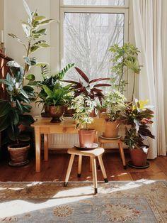 Janneke Luursema's Indoor Garden Oasis