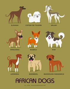 "mymodernmet: ""Illustrator Lili Chin's adorable series Dogs of the World illustrates 192 breeds of dogs grouped according to geographical origin. "" likes this ♥"