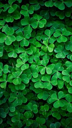 Find the Four-leaf Clover