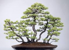 bonsai style radeau - pin blanc 01More Pins Like This At FOSTERGINGER @ Pinterest☝✋