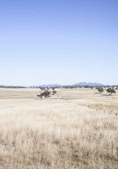 Kara Rosenlund - Sydney in Pictures Beautiful Landscapes, Beautiful Images, Kara Rosenlund, Australia Landscape, Australian Photography, Pretty Animals, Wanderlust Travel, Australia Travel, Landscape Photography