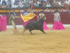 ISEP Student Stories: Stephanie Goes to the Spanish Bullfight. Just one of the amazing @ISEP StudyAbroad students who inspires me! #travel #Spain #studyabroad