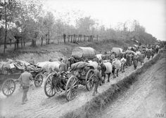 Oxen-drawn transport and artillery of the Serbian Army during its retreat from Morava to the Adriatic Sea coast, November-December 1915