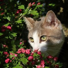 Cette beauté n'a pas le temps pour vous. | 16 photos de chats qui sont plus doués que vous pour faire un trait d'eye-liner