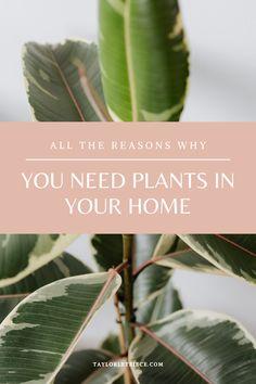 Get alllll the snake plants, monsterra, and pothos girl 🌿💐🌳