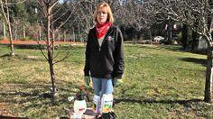 Fruit Tree Spraying