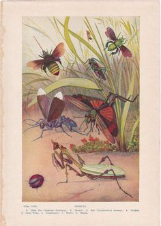 Insects from Route44West on Etsy #vintage illustrations #paper ephemera #vintage prints #insects