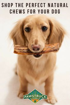 Do you love your dog? Our Mission is to Provide Dogs with Healthy Treats They Deserve. Shop Bully Sticks, Dog Bones, Antler Dog Chews & more from the leader in natural dog treats. Family owned & operated with your dog's health in mind. Treat your dog today!