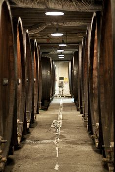 Champagne Holding - Korbel Wineries, CA   Flickr - Comunicación Digital l SocialMedia Planning l Redes Sociales l Mkt OnLine SEO SEM Posicionamiento OnLine www.ignaccolo-co.com info@ignaccolo-co.com 3413316009