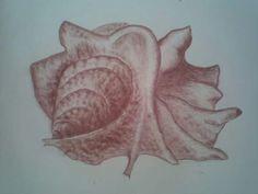 Mušle - kresba rudkou