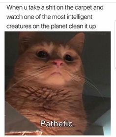 If you are looking for Cat Memes.Today we collect some Cat Memes evil that are so humor and hilarious.Read This Top 29 Cat Memes Evil Top 29 Cat Memes Evil Top 29 Cat Me… Funny Animal Memes, Funny Animal Pictures, Cute Funny Animals, Funny Cute, Funny Memes, Funny Work, Memes Humor, Super Funny, Humor Quotes
