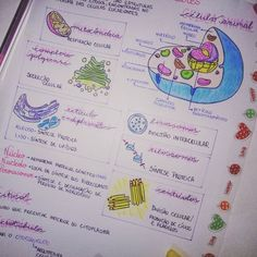 #Célula #Study #Resumos #OitavoAno