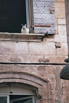 The cat in the window. France.