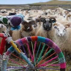 Didn't know whether to pin this to bicycle, yarnbombing or sheep!