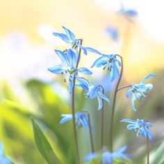 Warm Spring. by Eduardo Diaz on 500px