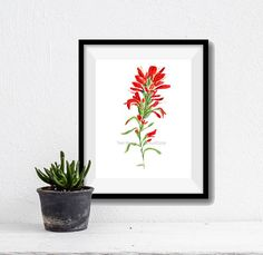 Indian paintbrush watercolor, Indian paintbrush painting, Texas flower, wild flower art, botanical painting, Red, Green, flower watercolor