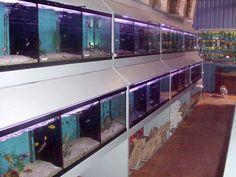 Untitled Document Aquarium Store, Aquariums, Aquarium Shop