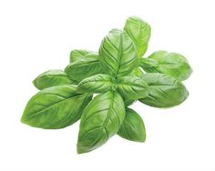Organic basil oil is an essential oil which is steam distilled from the leaves and flowering tops of the basil plant, also known by the botanical name Ocimum basilicum. Many consumers use basil oil in aromatherapy for its therapeutic properties and Colored Labels, Basil Oil, Following A Recipe, Basil Plant, Cacao Beans, Five Ingredients, Like Chocolate, Soap Recipes, Organic Oil