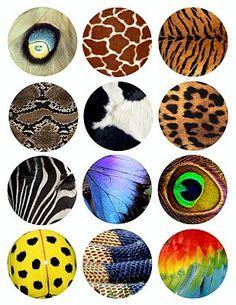animal skin birds feathers