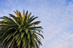 Palm Against Blue Sky  ➤ DOWNLOAD by click on the picture ➤  #Palm #Bluesky #City #freestockphotos