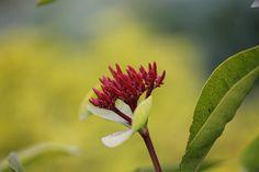 by Pranjal Bikash Das, via Flickr