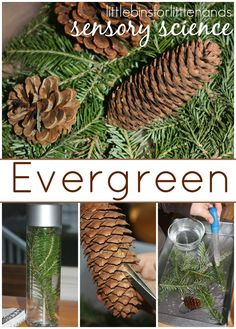 Evergreen Science Preschool Examination and Observation Activity