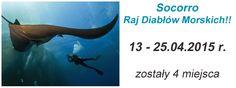 www.nautilus.com.pl ZAPRASZAMY! Safari nurkowe http://nautilus.com.pl/wyprawy/socorro.html #Socorro #nurkowanie #SafariNurkowe #Nautilus #diving #DivingSafari #expedition