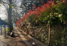 Ranelagh ciudad jardin mes de octubre en mas de doscientos dias de cuarentena Sidewalk, Parking Lot, Parks, Gardens, Cities, Sidewalks, Pavement, Walkways