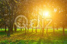 Qdiz Stock Photos | Autumn View on Trees and Sun,  #autumn #background #beautiful #beauty #blue #branch #colorful #day #environment #field #foliage #golden #grass #green #idyllic #land #landscape #lawn #leaf #leaves #meadow #multicolored #nature #nobody #orange #outdoors #park #plant #scenery #scenic #season #Sun #sunlight #sunny #tranquil #tree #view #weather #wood #yellow