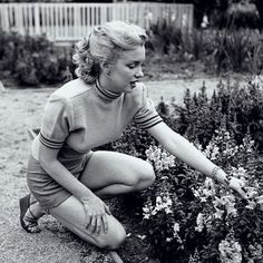 Gardening ✨ #marilynmonroe #normajeane #marilynmonroefan #oldhollywood #marilynettes