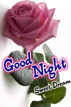 Good Night Greetings, Good Night Wishes, Good Night Sweet Dreams, Good Night Love Quotes, Good Night Gif, Good Morning Quotes, Good Morning Romantic, Good Morning Friends Images, Festival Image