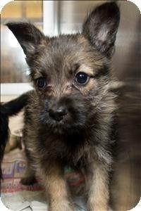 Birmingham, AL - Terrier (Unknown Type, Medium) Mix. Meet Dewie a Puppy for Adoption.