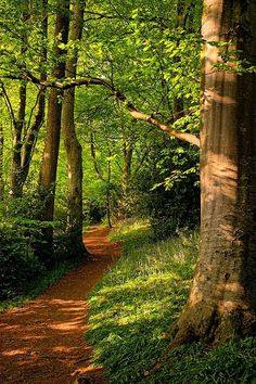 path through the woods....