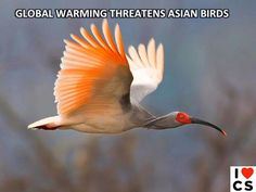 Birds of Asia Threatened By Climate Change