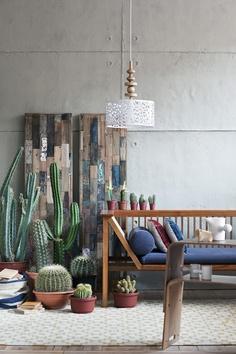 cactus + reclaimed wood panels