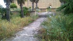 Gibellina, erbe infestanti presso il Palazzo di Lorenzo
