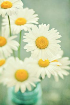Still Life Photography White Daisy Flowers by LawsonImages on Etsy, $30.00