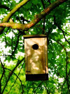 500px'te Faruk Kırmızı tarafından Birds Nest fotoğrafı #bird